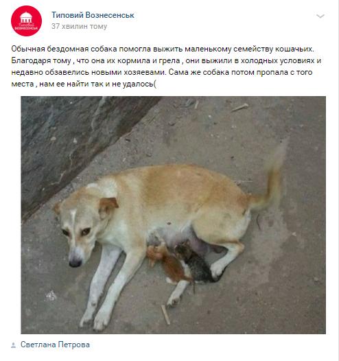 У Вознесенську бездомна собака стала мамою кошенятам-сиротам, фото-2