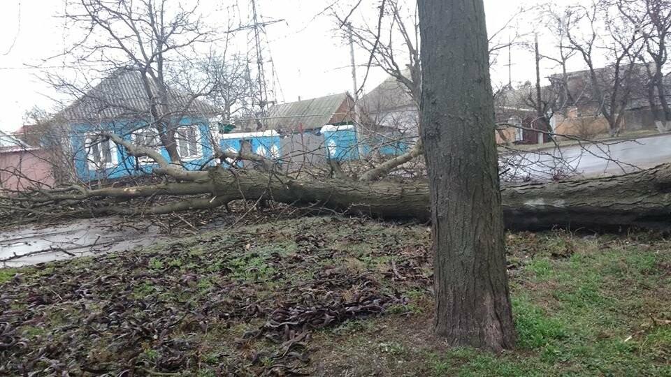 Не проїхати: У Вознесенську через погодні умови дерево впало на дорогу, - ФОТО, фото-1