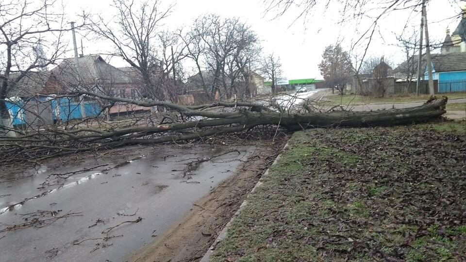 Не проїхати: У Вознесенську через погодні умови дерево впало на дорогу, - ФОТО, фото-2