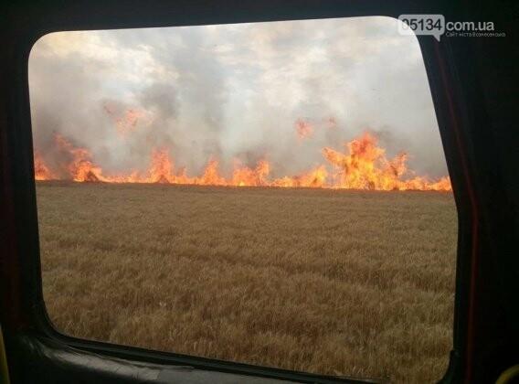На Вознесенщині через кинутого сірника вигоріло 8 гектарів пшениці, - ФОТО, фото-1