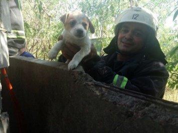 В Николаевской области из-за глупого щенка подняли на ноги пожарную команду, фото-1